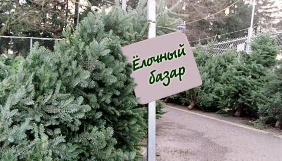 новый год, елки